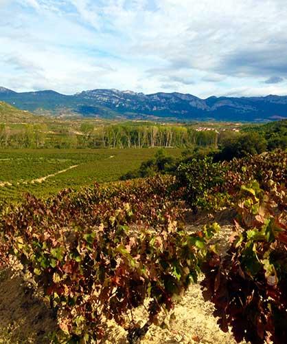 Norte, Sierra de Cantabria /  North, Sierra de Cantabria / 北面是坎塔布里亚山脉